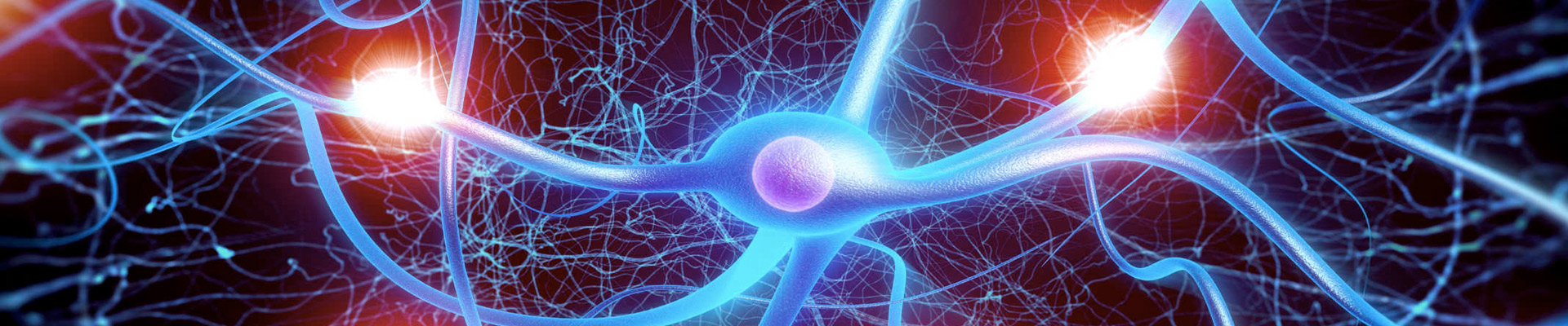 Nerves transmit life in the body