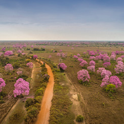 Pantanal - Poconé