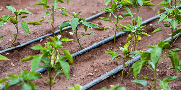 drip-irrigation-article-images-02-600x35