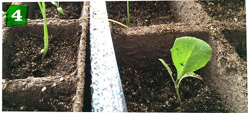 how-to-start-plants-from-seed-step-04.jp