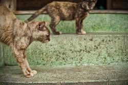 SOI-CATS-02