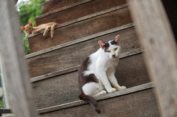 SOI-CATS-07