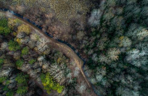 Blick auf den Wald von oben - wie im ThetaHealing®