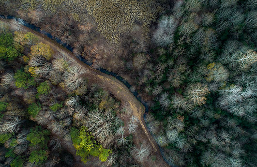 Drone picture of a forest in The Bioasis