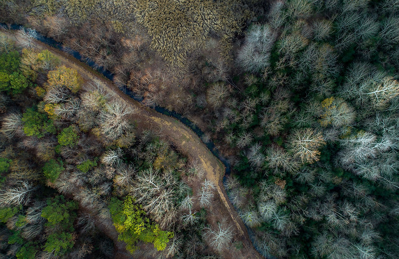 Aerial Forest