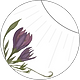 blume_photo (1).png