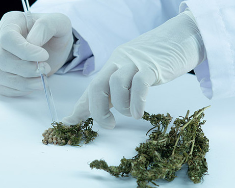 Cannabis: the rules of the new regulation system.