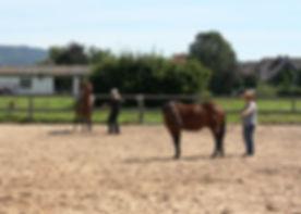 Horsemanshipkurs 2012 069.JPG