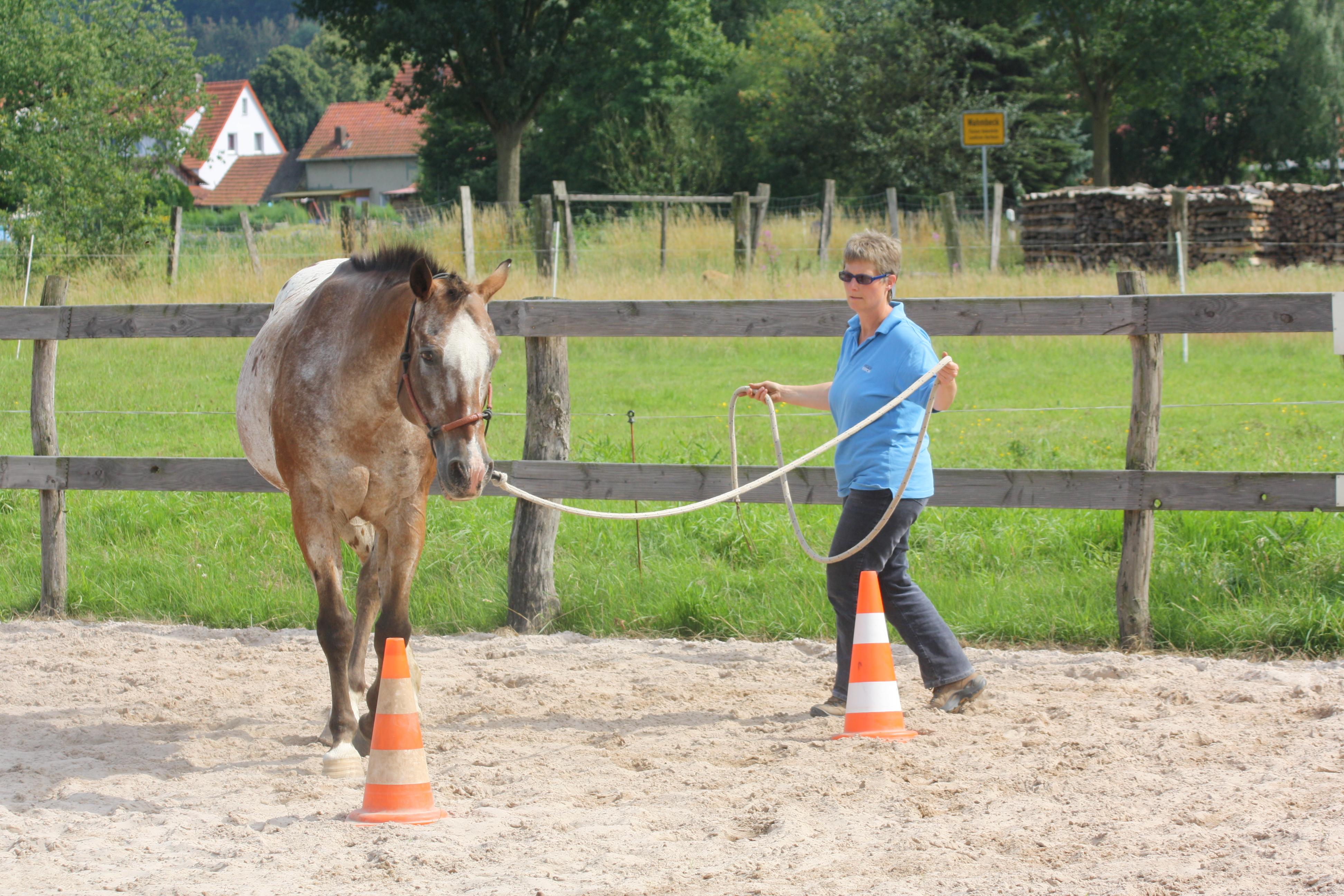 Horsemanship Arbeitskurs auf