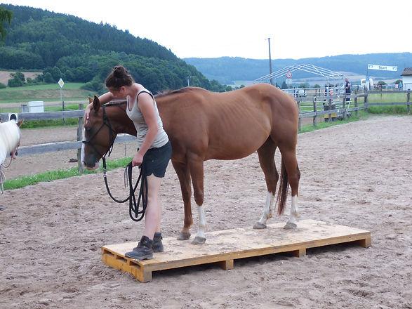 Kids Horsemanshipwoche auf der AHF 170.J