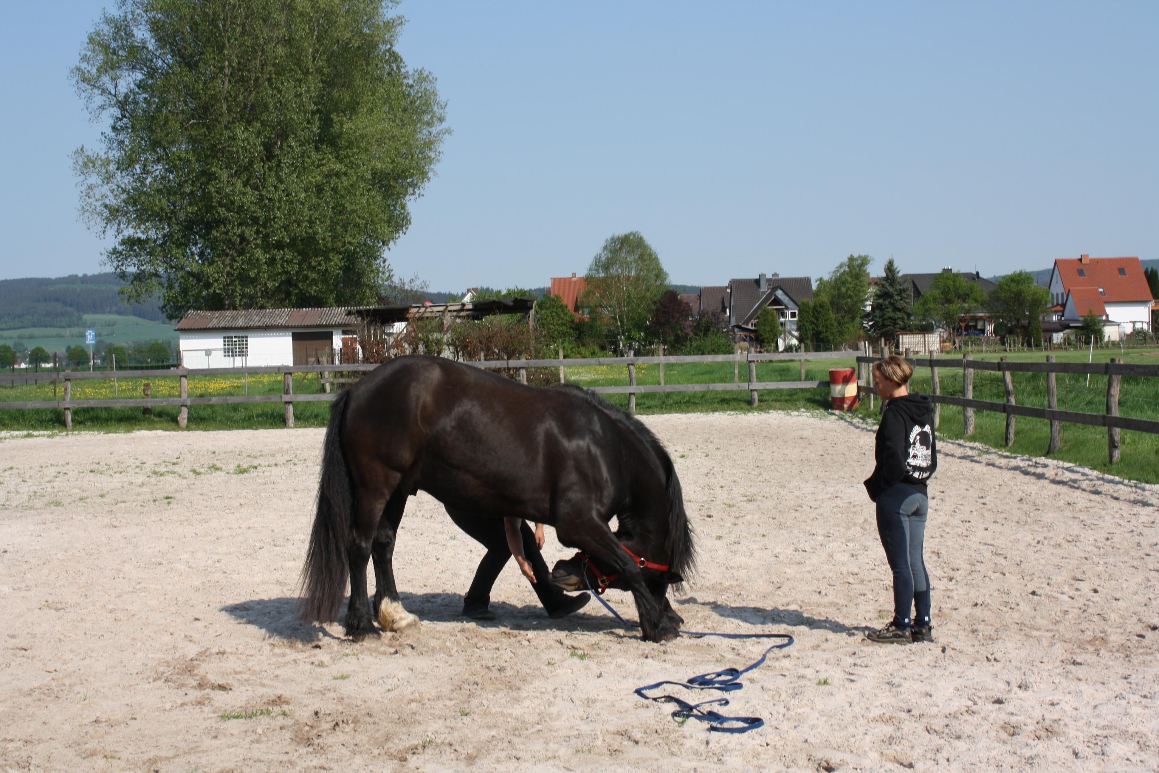 Dehnübung für Pferde