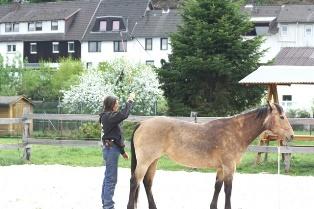 Horsemanship Arbeit