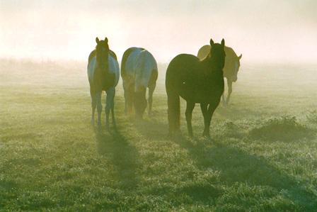 Pferde auf der
