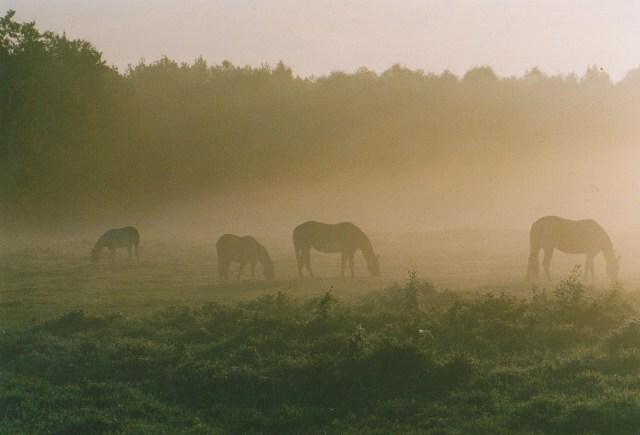 Pferde der Absarokee Horse Farm