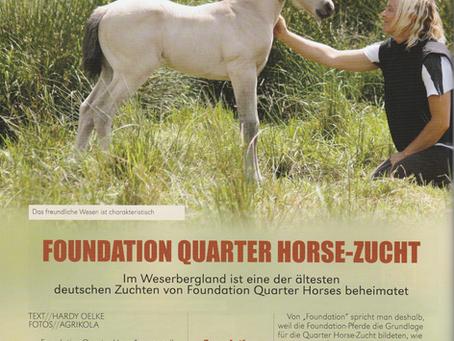NFQHA- Foundation Quarter Horse Zucht