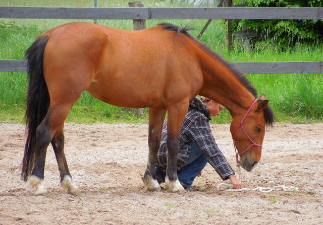 Kopf geben des Pferdes nach unten