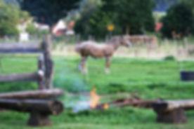 Horsemanshipkurs 2012 020.JPG
