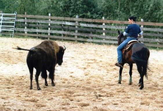 Absarokee Horse Farm