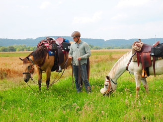 NFQHA- Foundation Quarter Horses
