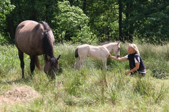 Foundation Horses