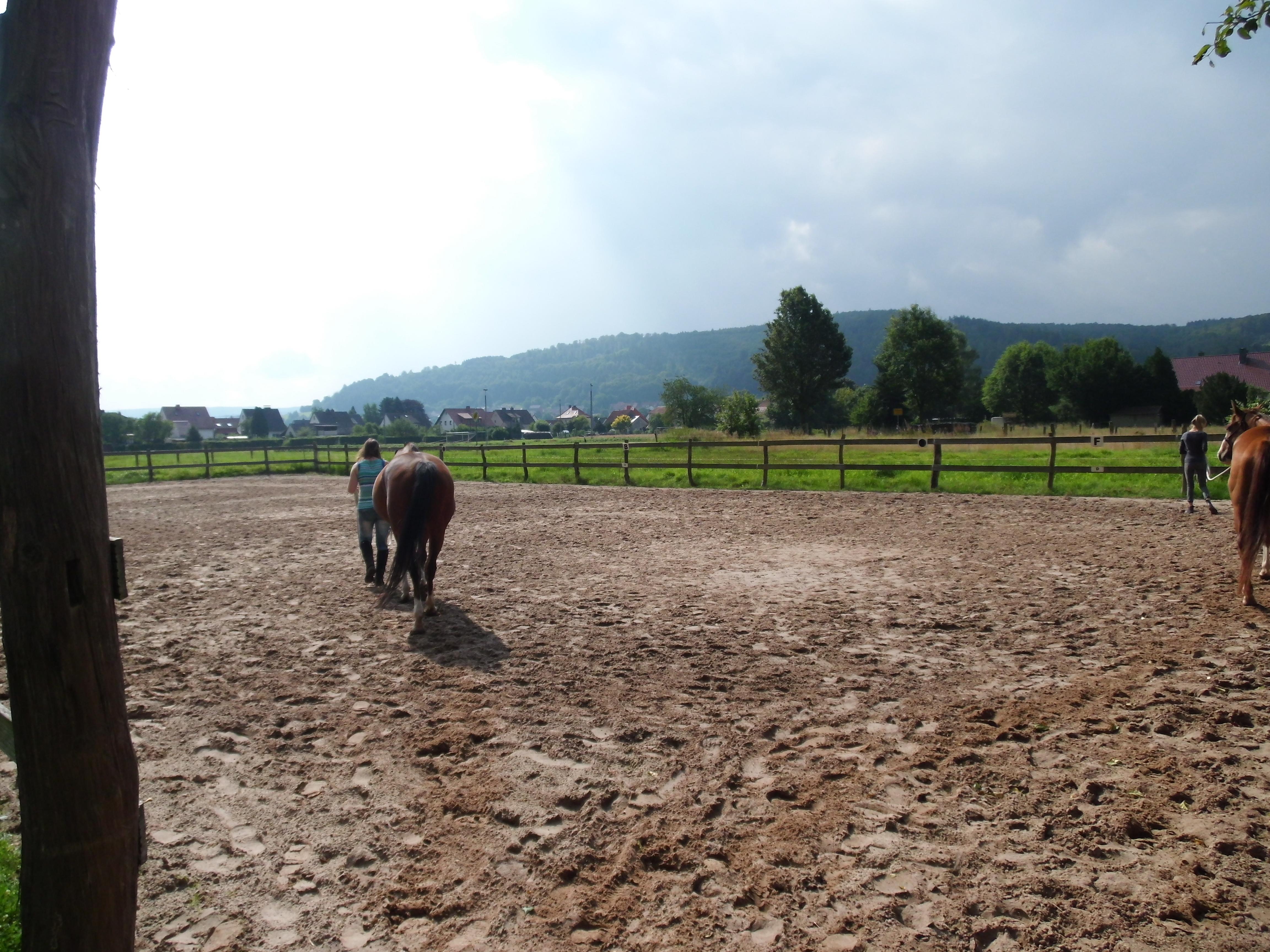 "Westernreitkurs ""Umgang Mit dem Pferd"""
