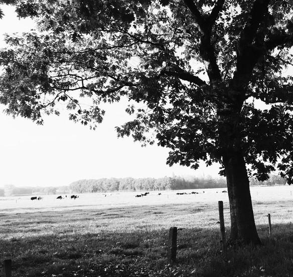 Gedicht - Herfst