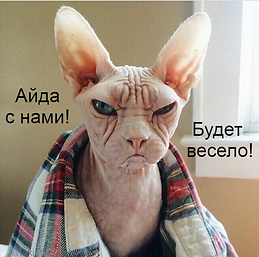 кот злюка на ритрит.png