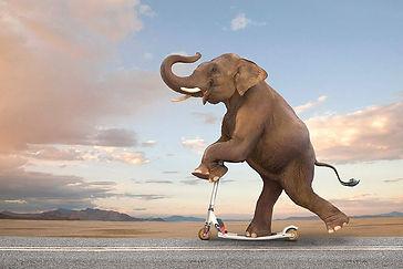 слоненок 6.jpg