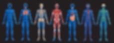 системы тела.jpg