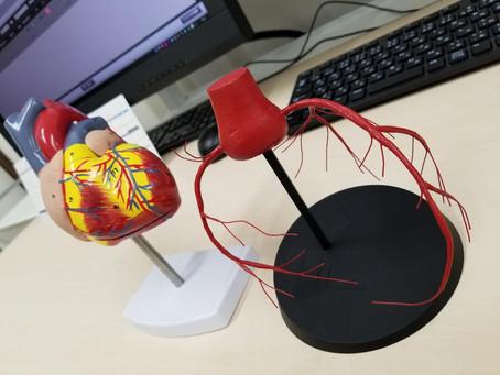 冠動脈模型でした