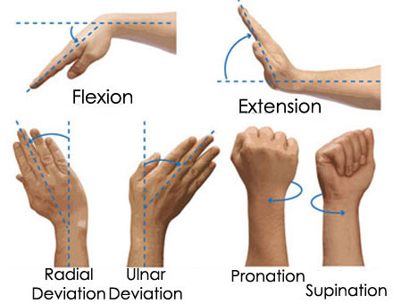 Figure 2. Hand and wrist movement