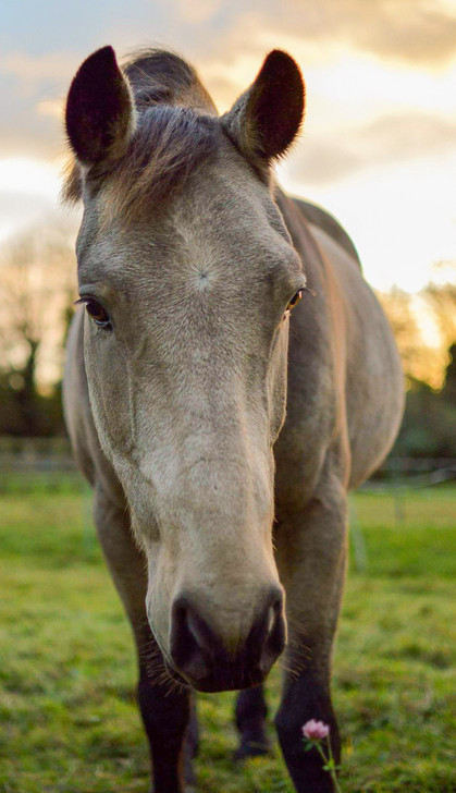 Equine Image-30.jpg
