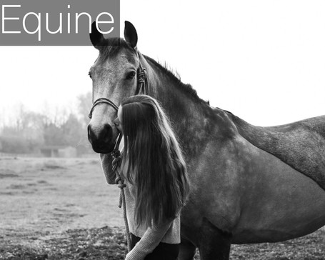 Equine Prices - text 4.jpg