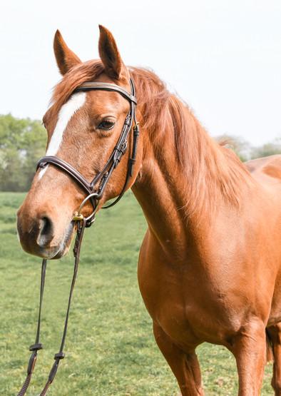 Equine Image-22.jpg