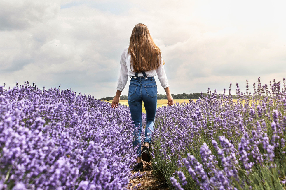 Dreaming of Lavender
