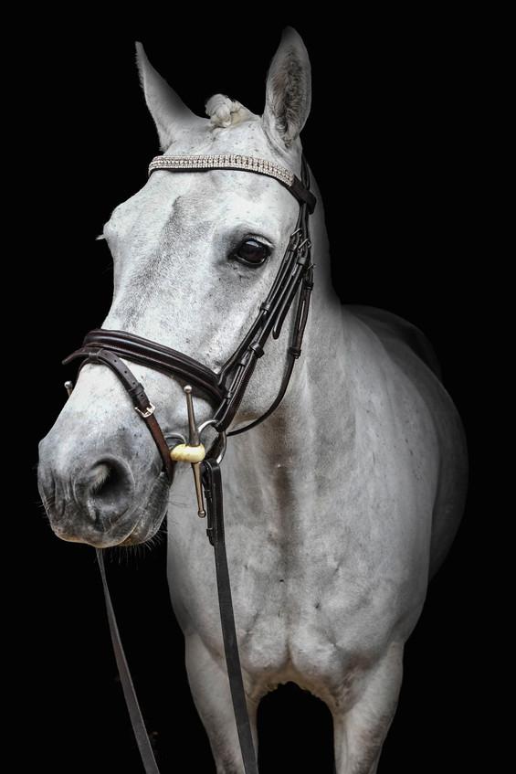 Equine Image-29.jpg