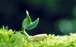 plantss-is