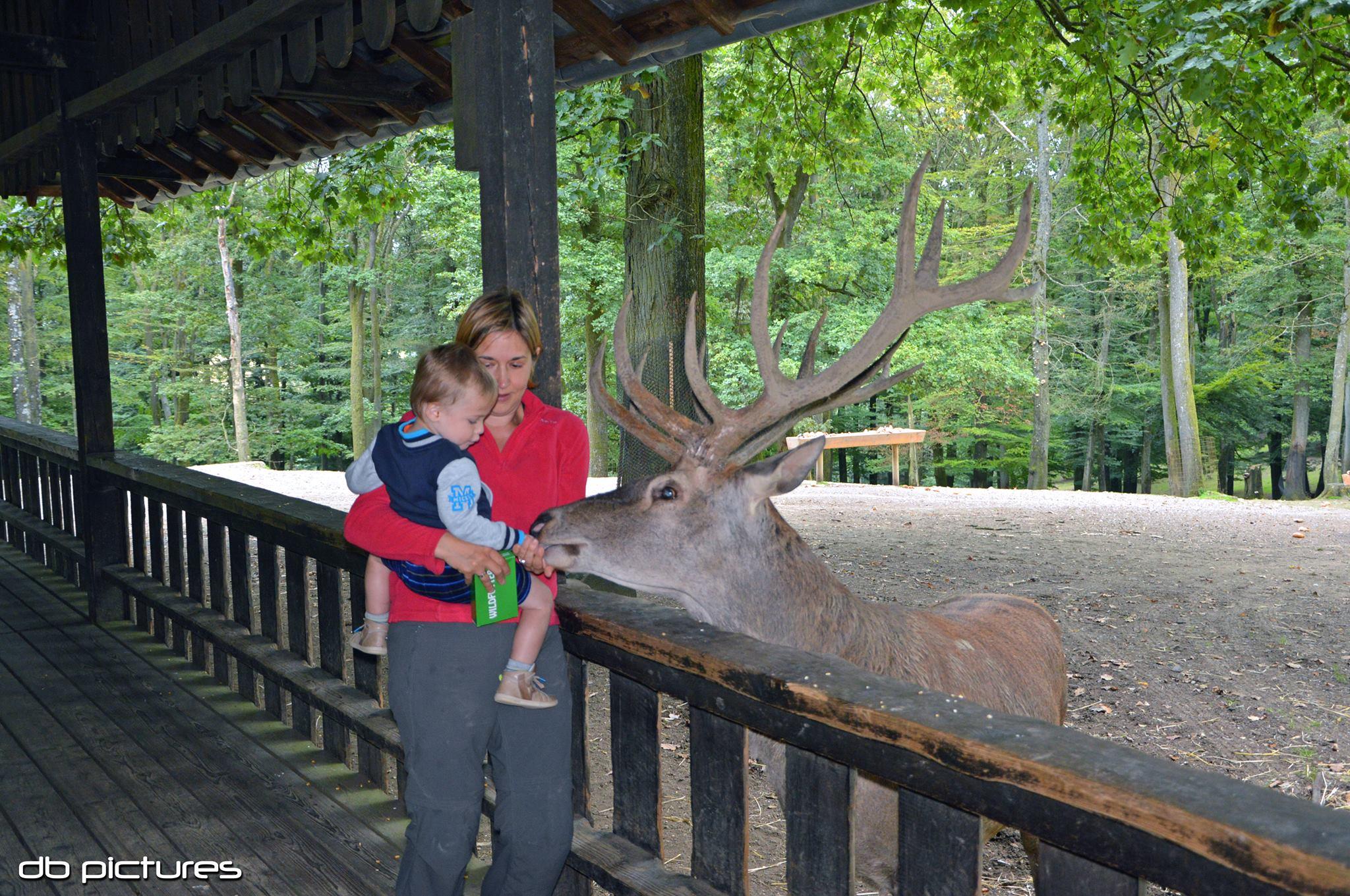 Wild- und Erlebnispark in Daun