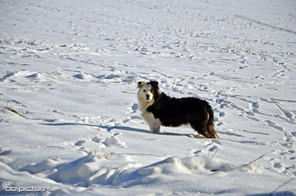 Sneeuw in de Eifel