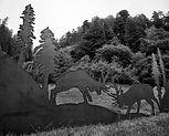 Elk IMG_1790 - Cropped.jpg