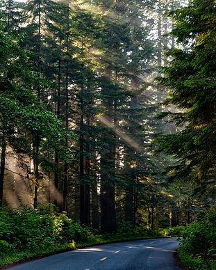 forest-1598756_1920.jpg