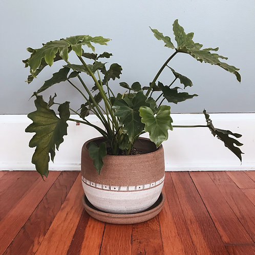 Two Toned Stoneware Planter with Drainage Tray