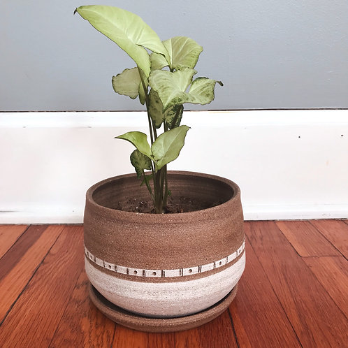 Two Toned White Planter with Drainage Tray