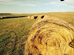 Yarding Hay
