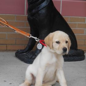 Arlington puppy.jpeg