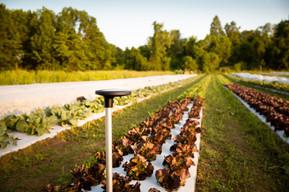Arable Crop Health | S2G Ventures Portfolio