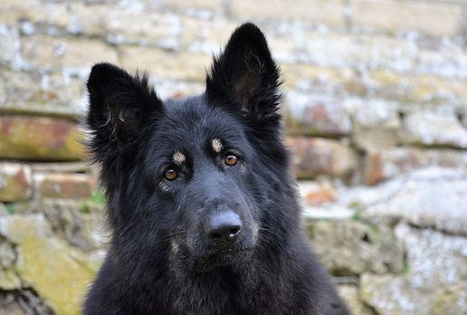 Maya la légende du loup noir
