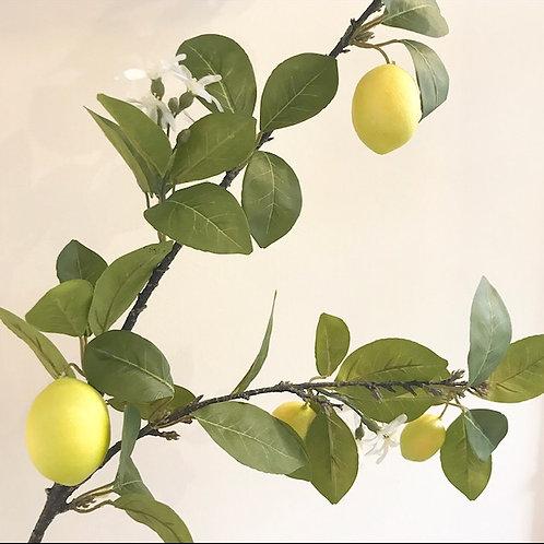 Large lemon Tree Branch