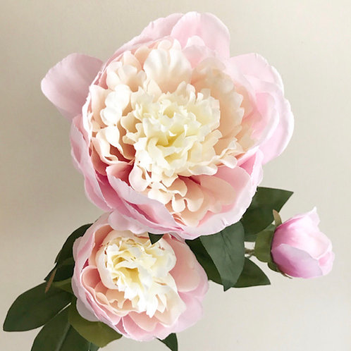 Pink Garden Peony Triple Head