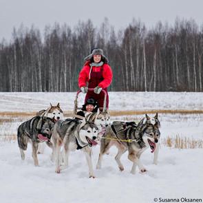 Helmikuussa 2016 keskiviikon tapaaminen siirrettiin lauantaiksi ja lähdimme kuvaamaan ja nauttimaan koiravaljakon kyydistä Vesilahdelle Erkki O. Mäkelän huskykenneliin. Kuva: Susanna Oksanen
